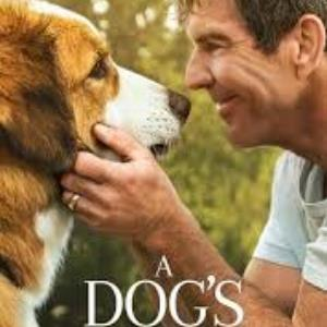 A Dog's Journey movie review : Sentimental saga of love, trust and hope