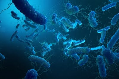 Are good bacterias getting viral infections?
