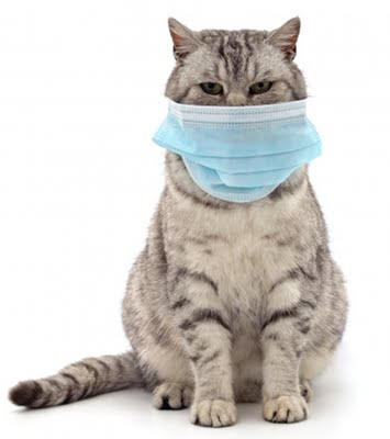 Human to cat transmission of Covid virus found in UK