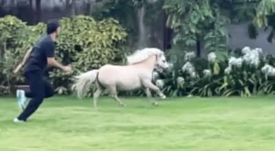 CSK skipper Dhoni 'tests his fitness' with a Shetland pony