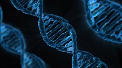 Male hormones accelerate DNA ageing
